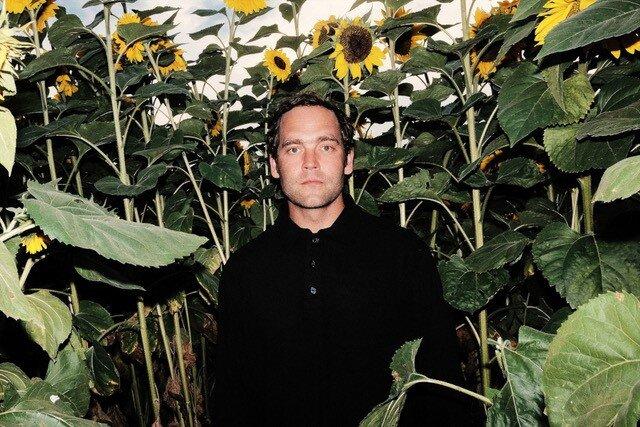 Bosse Sonnenblumen